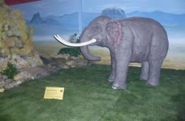Dinosauri ed Elefanti